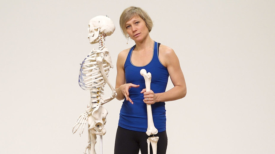 Anatomy On Hip Stiffness And Hip Openers